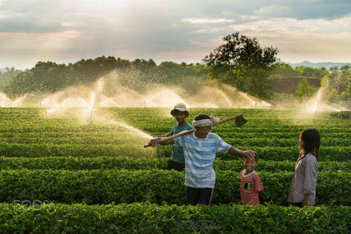 Bảo Lộc – vùng đất của những đồi trà